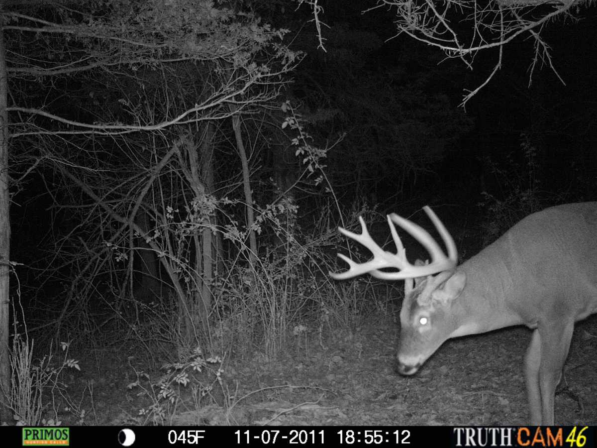 DNR Should Not Reduce Hunting Licenses