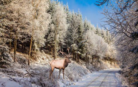 Short Story: Deer in the Road