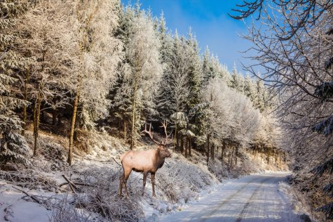 Short Story: Deer in the Road
