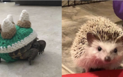 Navigation to Story: The Most Unusual Pets at MVHS